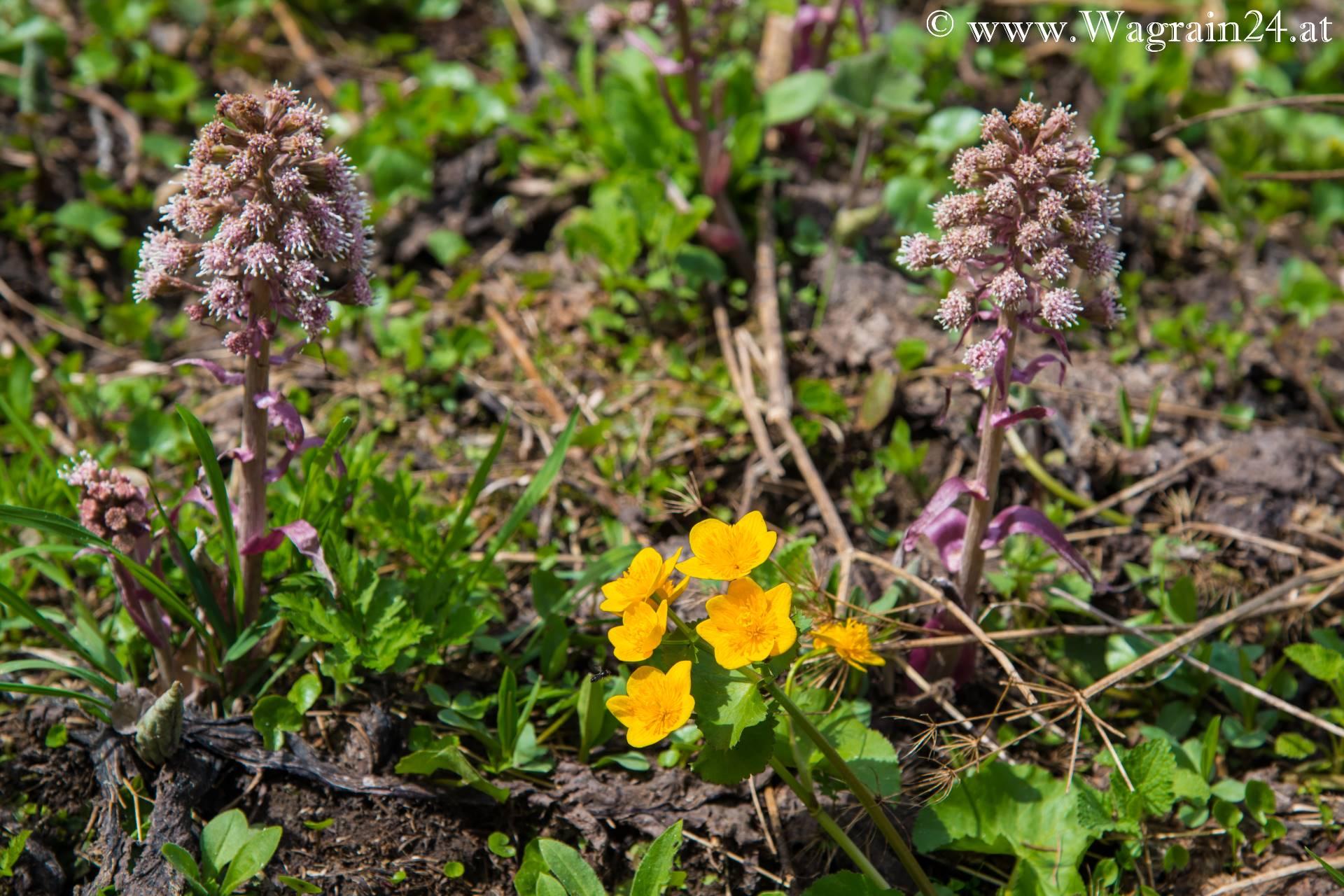 Bemerkenswert Blumen Mai Das Beste Von Am Jägersee Im 2015